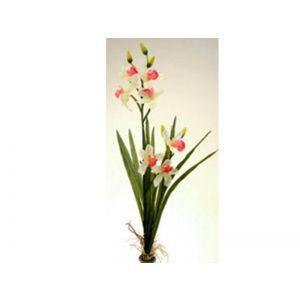 Orhidee color+radacina