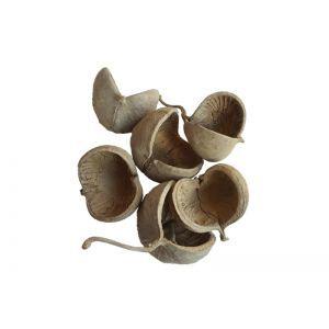 Set 10 budha nut