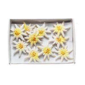 Set 10 floare de colt cu adeziv