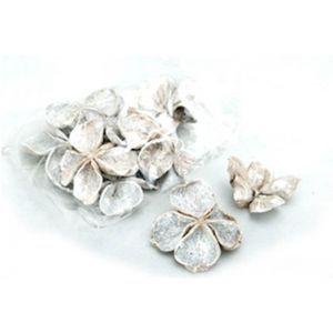 Set 10 land lotus albit 7-10 cm