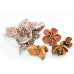 Set 10 land lotus natural 7-10 cm