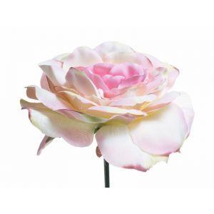 Trandafir color